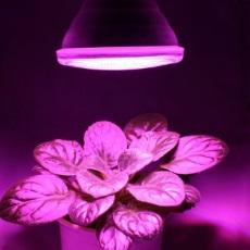Neue GoLeaf LED Pflanzenlampe in PAR38 Bauform
